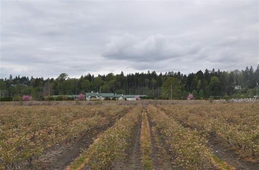 R2073874 - 5052 KING GEORGE BOULEVARD, Sullivan Station, Surrey, BC - House with Acreage